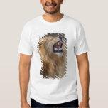 A mature male lion (Panthera leo) in the Savuti Tee Shirt