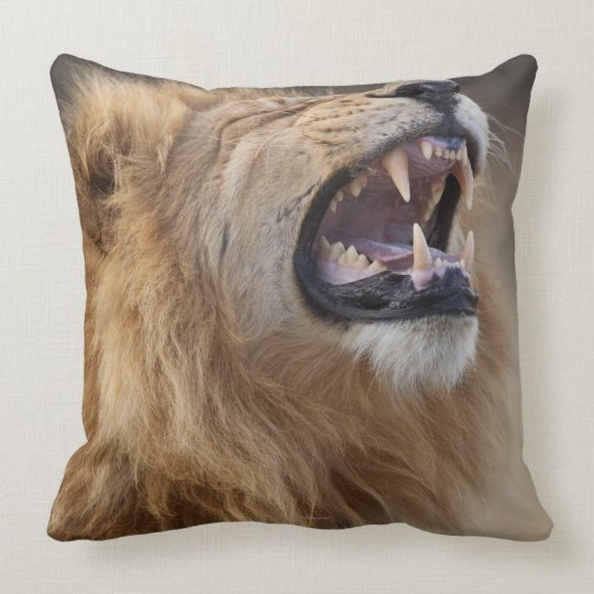 A mature male lion (Panthera leo) in the Savuti Throw Pillow