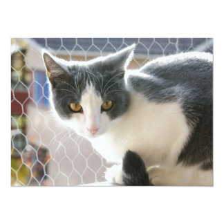 A Max And Mantle Bi Colour Cat Card