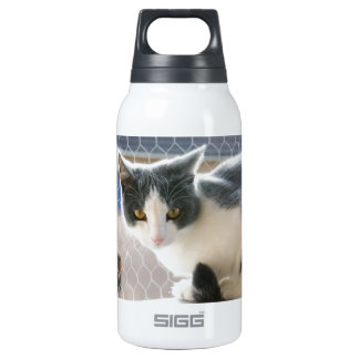 A Max And Mantle Bi Colour Cat Insulated Water Bottle