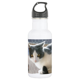 A Max And Mantle Bi Colour Cat Water Bottle