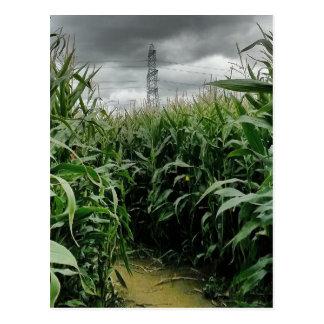 A maze of maize postcard