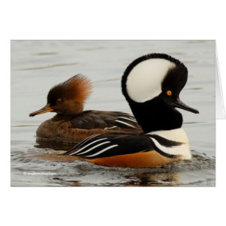 A Meeting of Hooded Mergansers Card