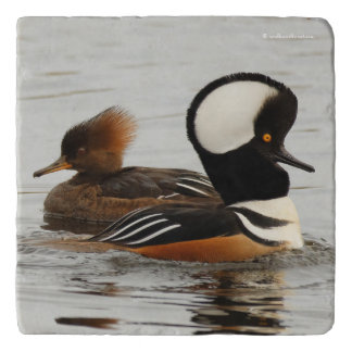A Meeting of Hooded Mergansers Trivet