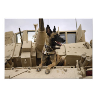 A military working dog sits on a M2A3 Photo Print