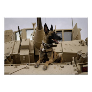 A military working dog sits on a M2A3 Poster