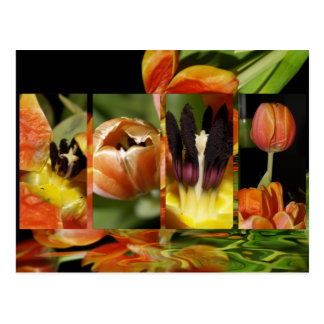 A Mirage Of Tulips Postcard