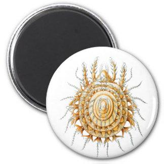 A Mite 2 Inch Round Magnet