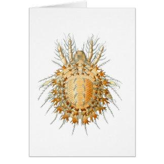 A Mite Card