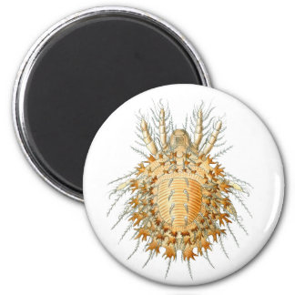A Mite Magnets