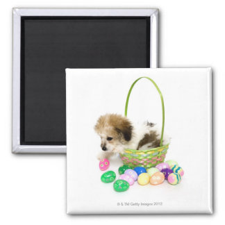 A mixed breed puppy sitting in an Easter basket 2 Inch Square Magnet