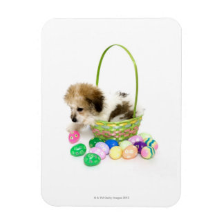 A mixed breed puppy sitting in an Easter basket Rectangular Photo Magnet