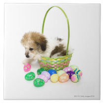 A mixed breed puppy sitting in an Easter basket Tile