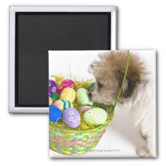 A mixed breed puppy sniffing at an Easter basket 2 Inch Square Magnet