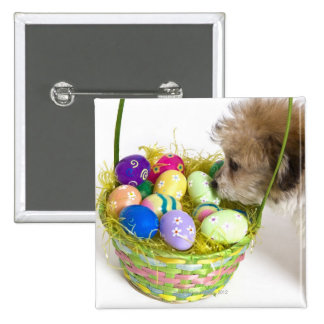 A mixed breed puppy sniffing at an Easter basket Button