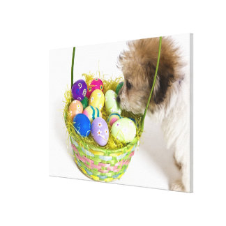 A mixed breed puppy sniffing at an Easter basket Canvas Print