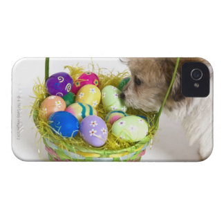 A mixed breed puppy sniffing at an Easter basket iPhone 4 Cases