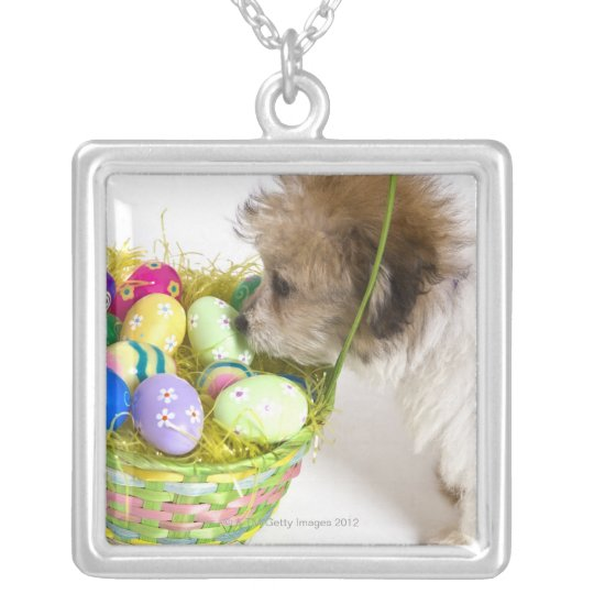 A mixed breed puppy sniffing at an Easter basket Silver Plated Necklace