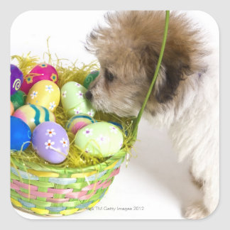 A mixed breed puppy sniffing at an Easter basket Square Sticker
