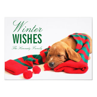 A mixed Vizsla puppy Card