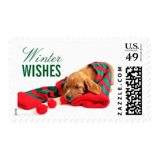 A mixed Vizsla puppy Postage Stamp