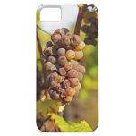 A moldy Semillon grape bunch at Ch Raymond Lafon iPhone SE/5/5s Case