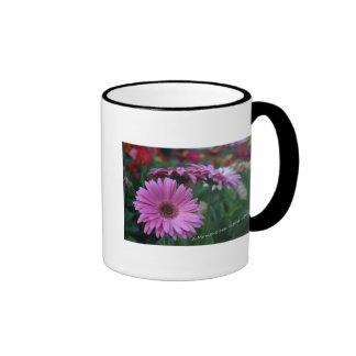 A Moment Pink Gerbera Daisies coffee cup gift Ringer Coffee Mug