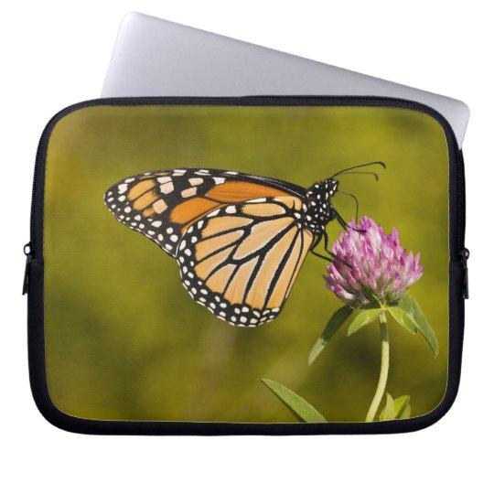 A monarch butterfly, Danaus plexippus, on clover Computer Sleeve