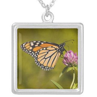 A monarch butterfly, Danaus plexippus, on clover Square Pendant Necklace