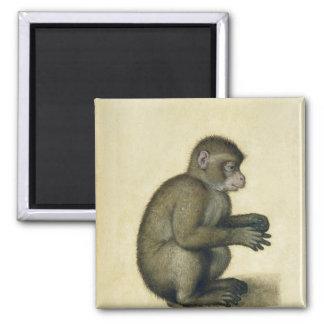 A Monkey Magnet