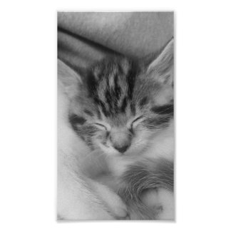 a monochromatic picture of, Rusell, a tabby kitten Poster