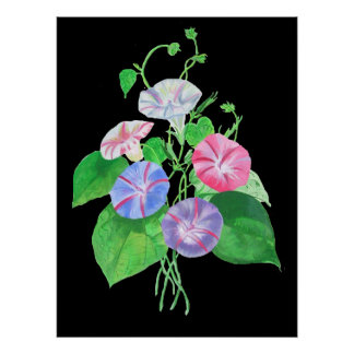 A Morning Glory Poster