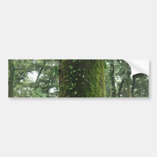 A moss covered beautiful tree car bumper sticker