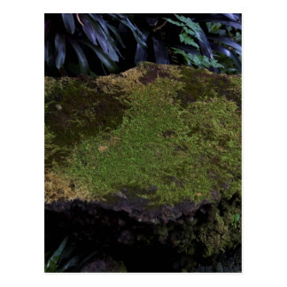 A moss covered stone postcard