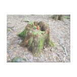 A mossy old tree stump stretched canvas prints