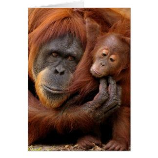 A mother and baby orangutan share a hug. card