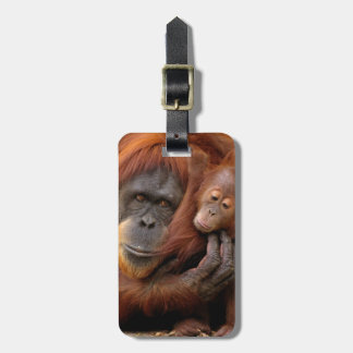 A mother and baby orangutan share a hug. luggage tag