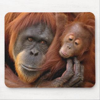 A mother and baby orangutan share a hug. mousepad