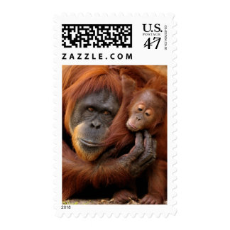 A mother and baby orangutan share a hug. postage