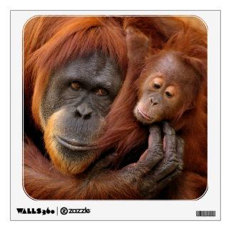 A mother and baby orangutan share a hug. room graphic
