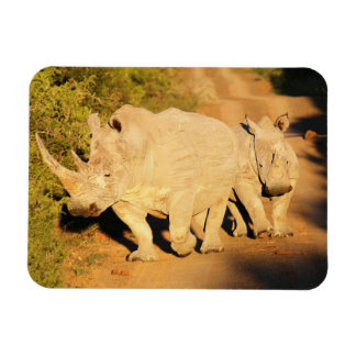 A Mother and Calf White Rhino in South Africa Magnet