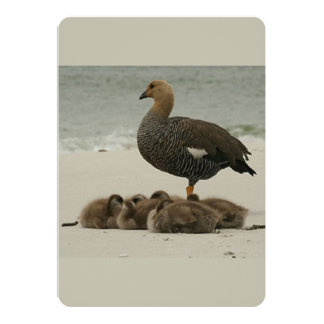 A Mother Magellan Goose With Her Young Card