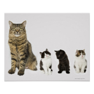 A mother with her four kittens all sitting print