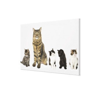 A mother with her four kittens sitting together stretched canvas print