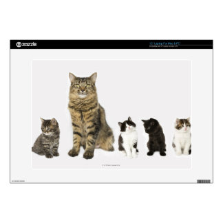 """A mother with her four kittens sitting together decals for 15"""" laptops"""