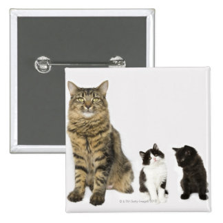 A mother with her four kittens sitting together pinback button