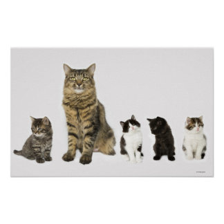 A mother with her four kittens sitting together posters