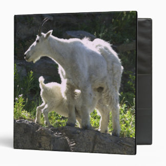 A mountain goat nanny nurses her kid in 3 ring binder