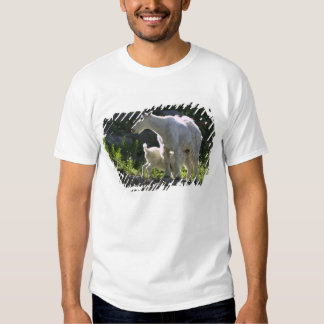 A mountain goat nanny nurses her kid in shirts