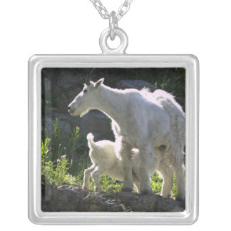 A mountain goat nanny nurses her kid in silver plated necklace